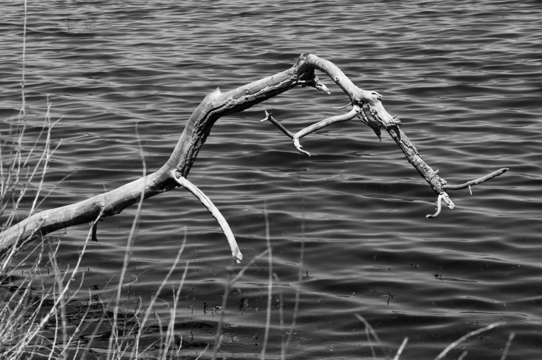 Branch on the Water