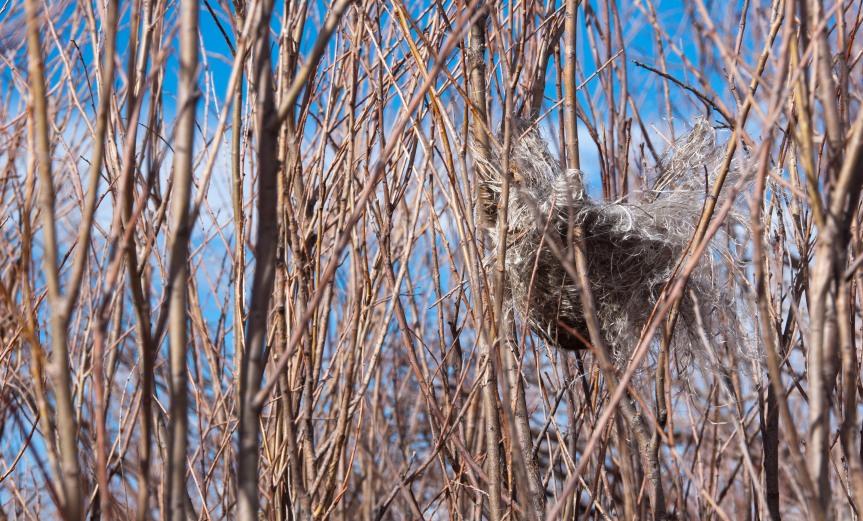 Bird's Nest in Branches