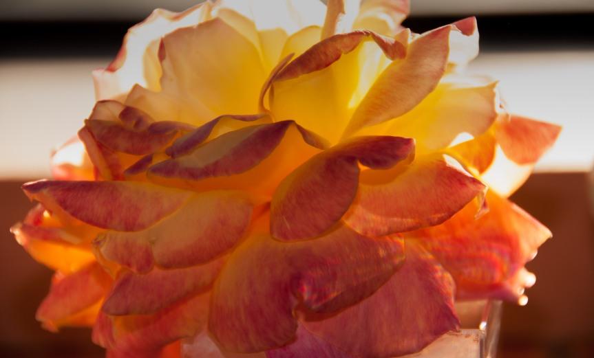 Petals in the Light