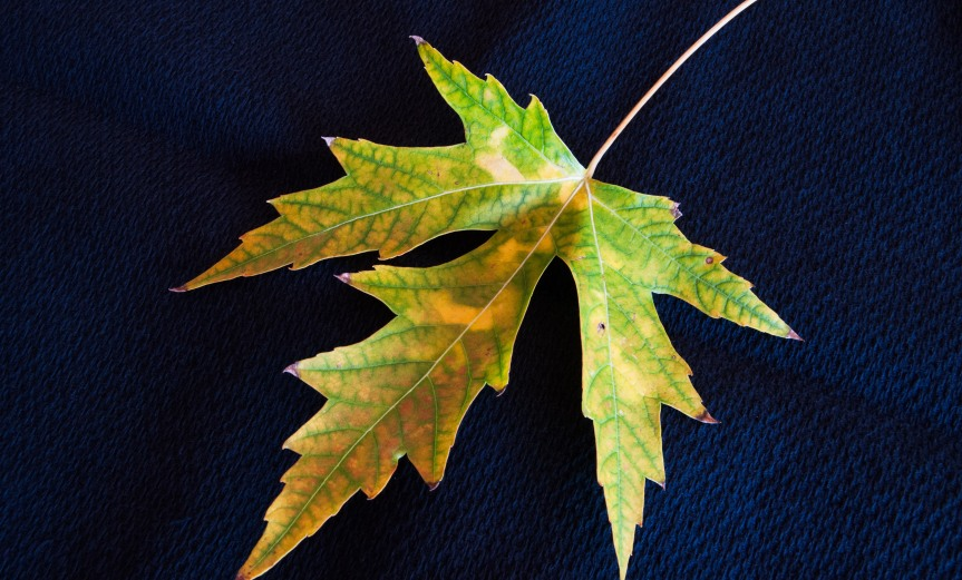 Fall Leaf - Indoors