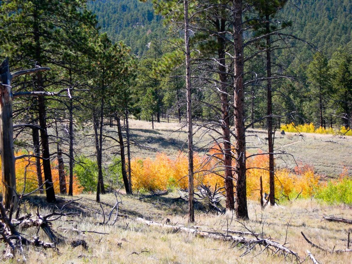 Dry Grass & Yellow Leaves in Forest