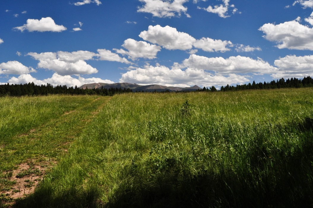 Pike's Peak from a Grassy Field