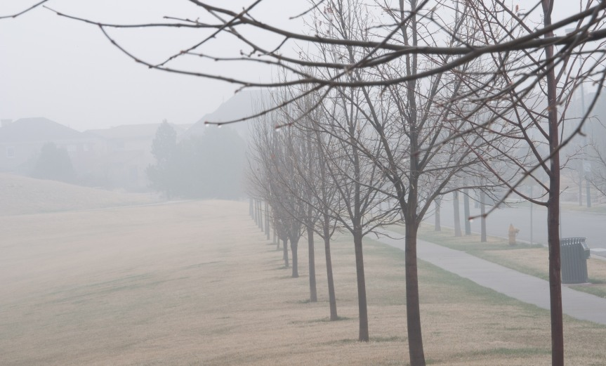 Line of Trees in the Fog