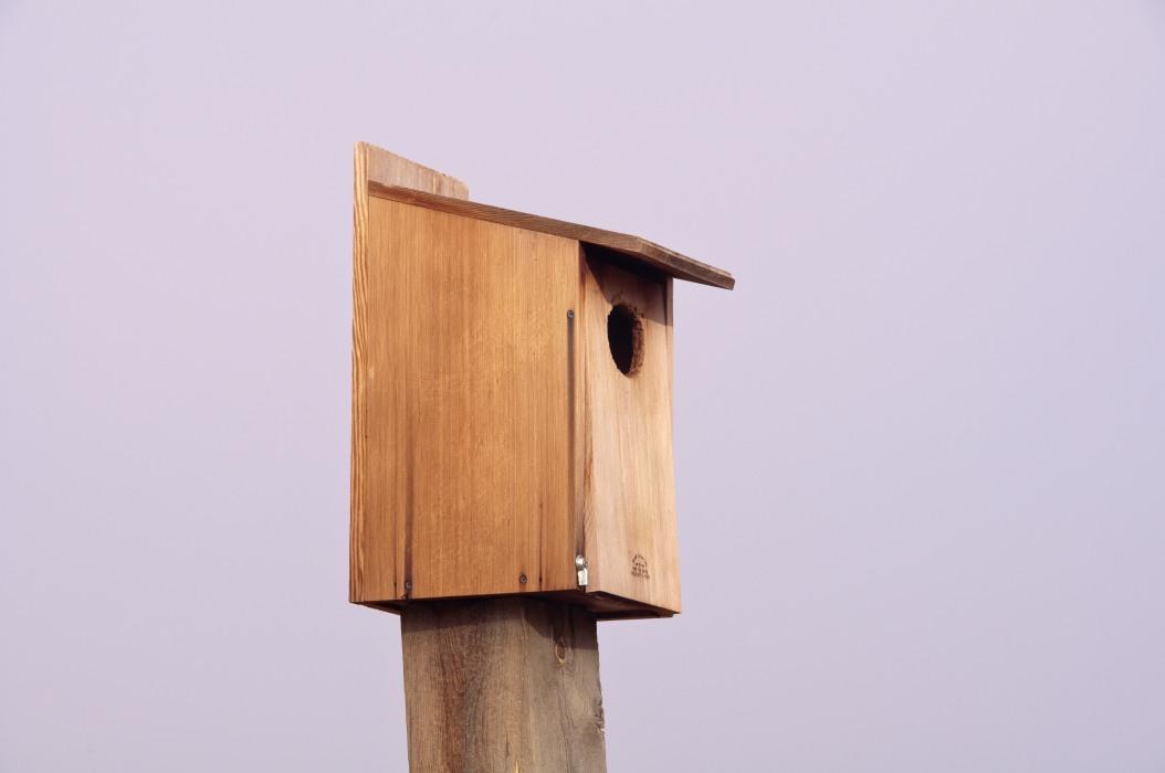 Bird Cafe
