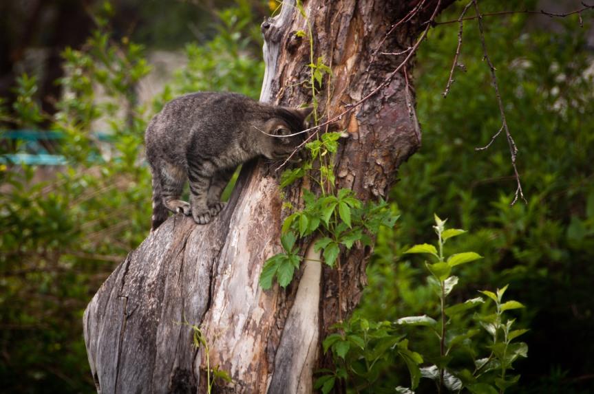 Cat in Old Apple Tree