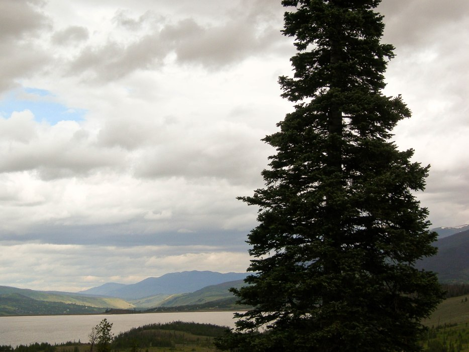 Tall Pine by Dillon Reservoir
