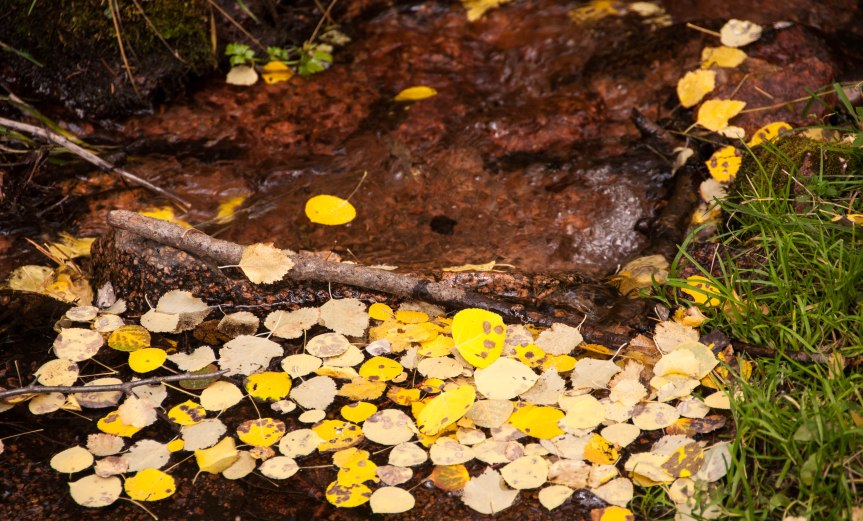 Aspen Leaves in a Mountain Stream