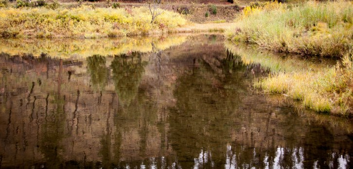 Reflections in a Mountain Pond