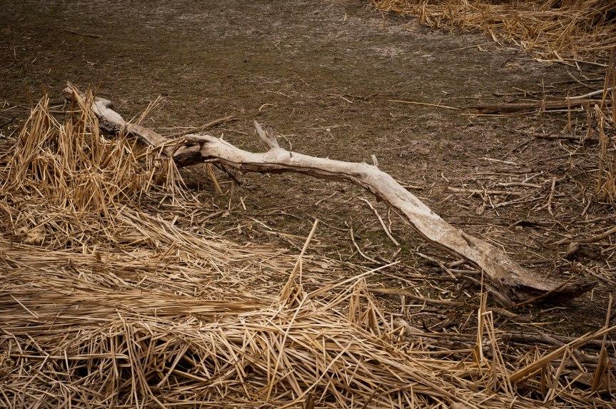 Log in Lake Bed
