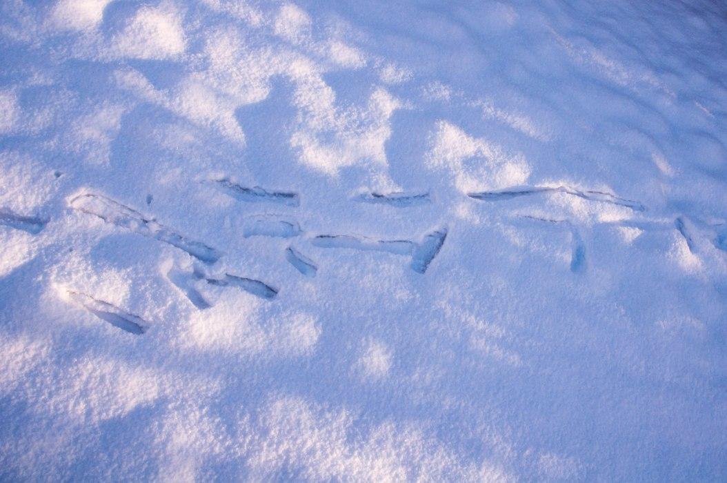 Strange Marks in Snow