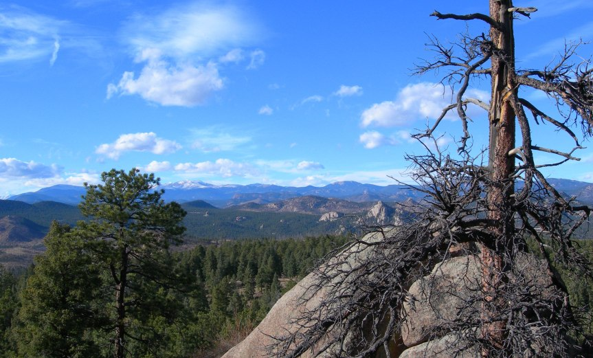 Dead Tree, Forest, and Mountains