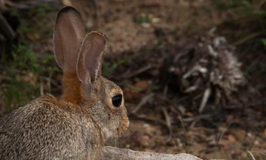 My, What Big Ears