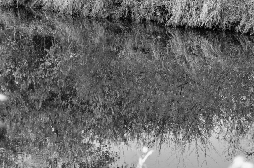 Reflection of a Stream Bank