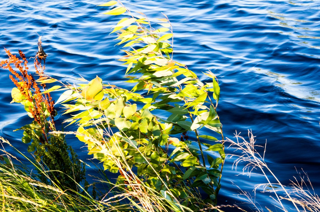 Wind on the Water and in the Leaves