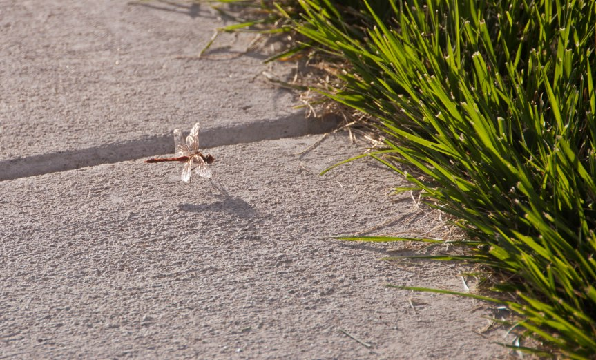 Dragonfly and Grass