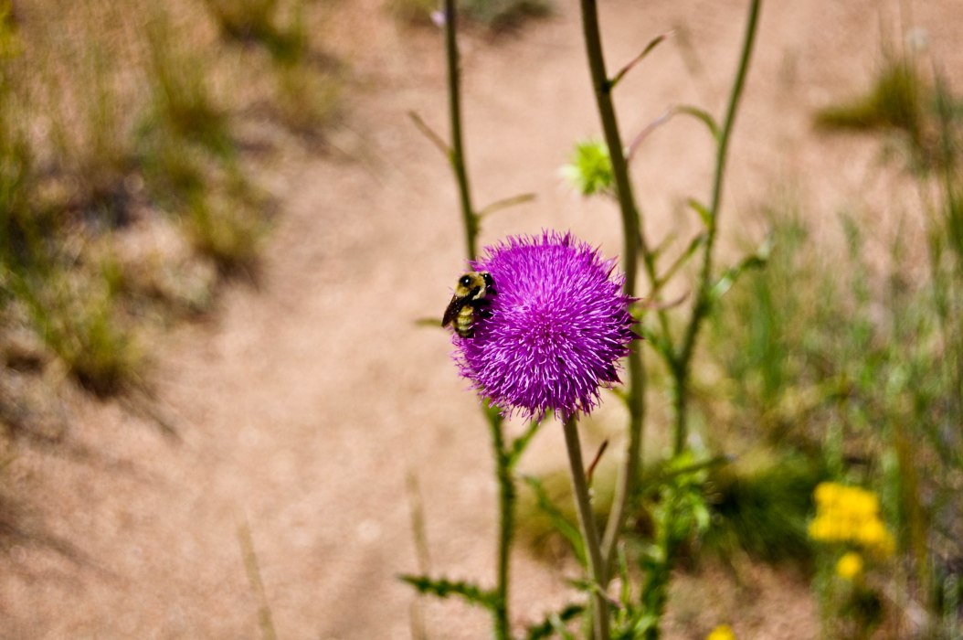 Bee, Bloom, Bike Trail