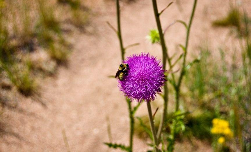 Bee, Bloom, Bike Trail