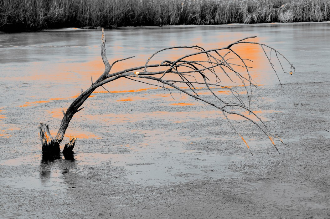 Branch in Frozen Pond with Hint of Orange