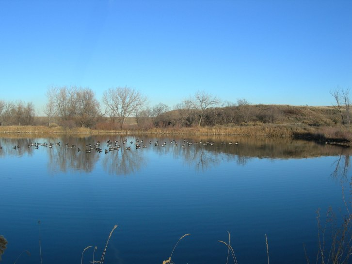 Ducks Enjoying the Pond