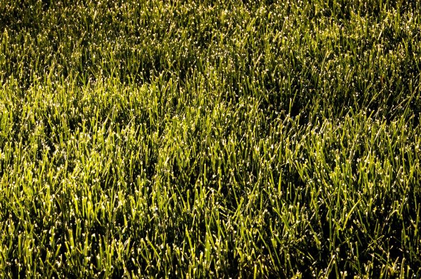 Dew on Fresh Cut Grass