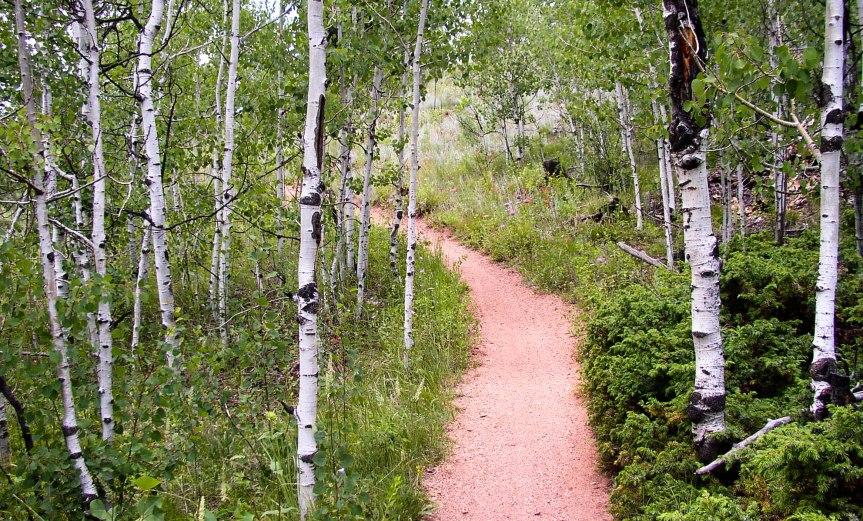 Trail Through Aspens