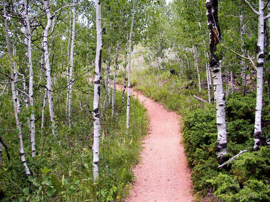 Trail Through Aspens
