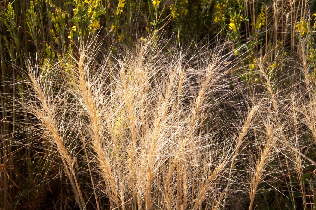 Spiky Grasses