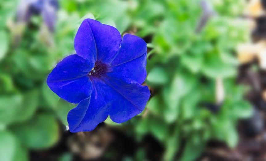 Blue Flower in Sea of Green