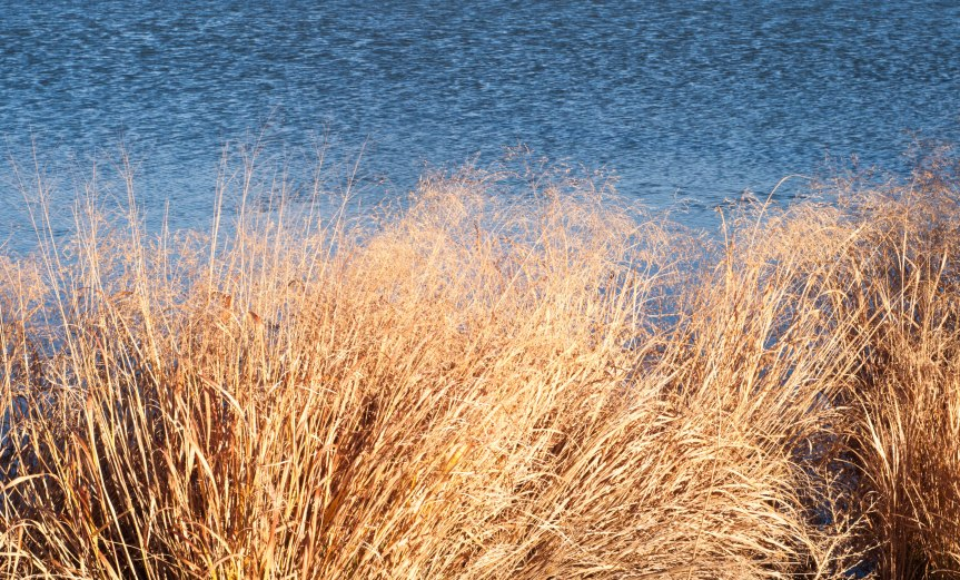 Grass Swaying at Water's Edge