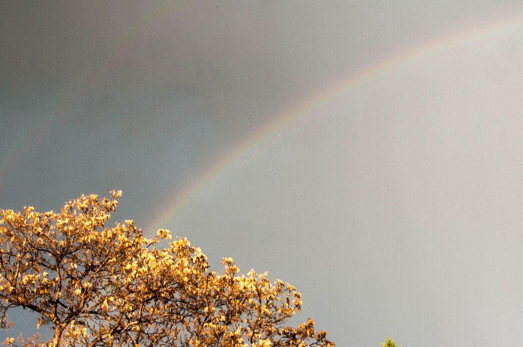 Rainbow and Leaves of Gold