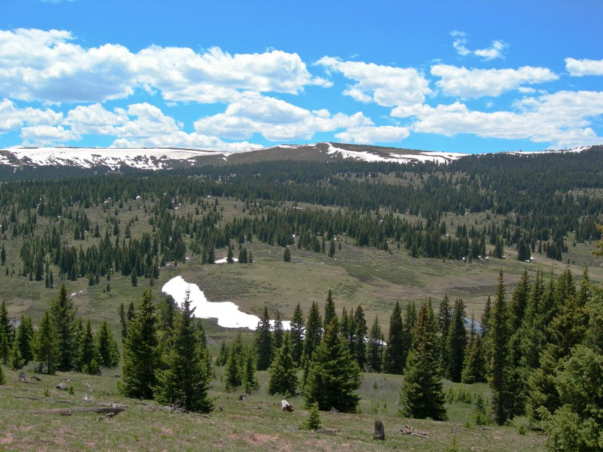 Mountain Meadow - Shrine Pass