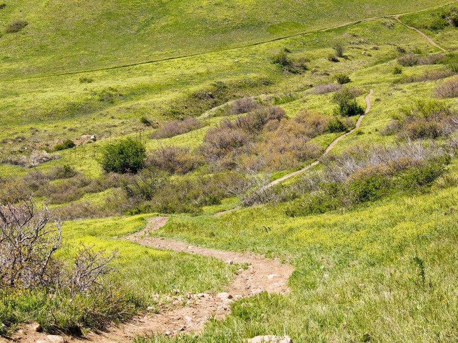 Bike Trail Downhill