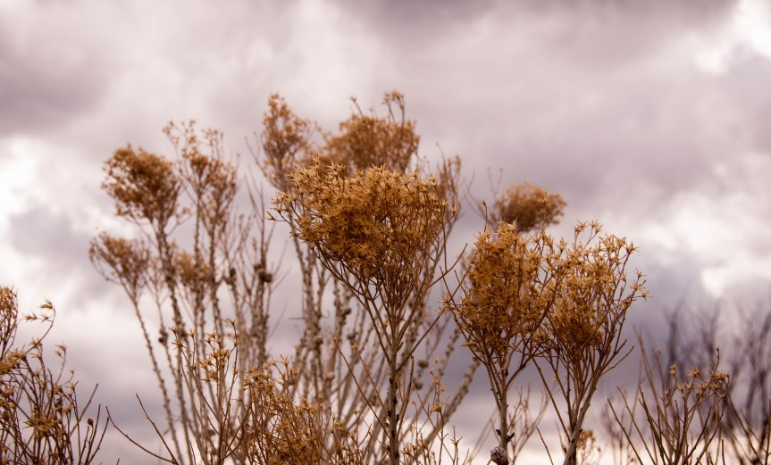 Native Grasses Against Cloudy Sky