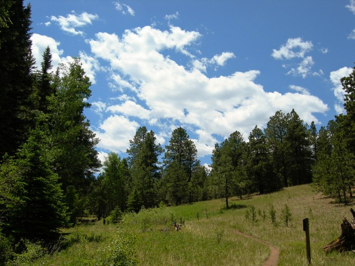 Bike Trail into Woods