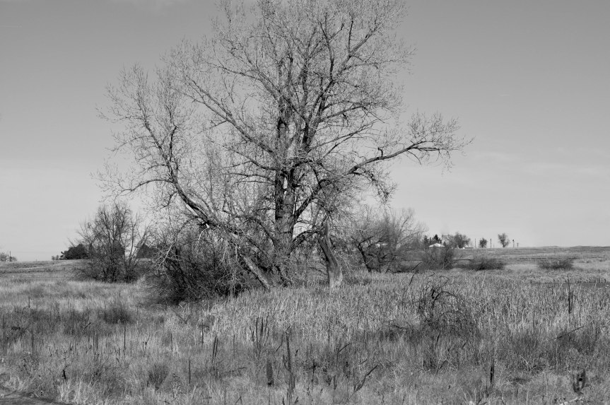 Winter, Tree, and Grass
