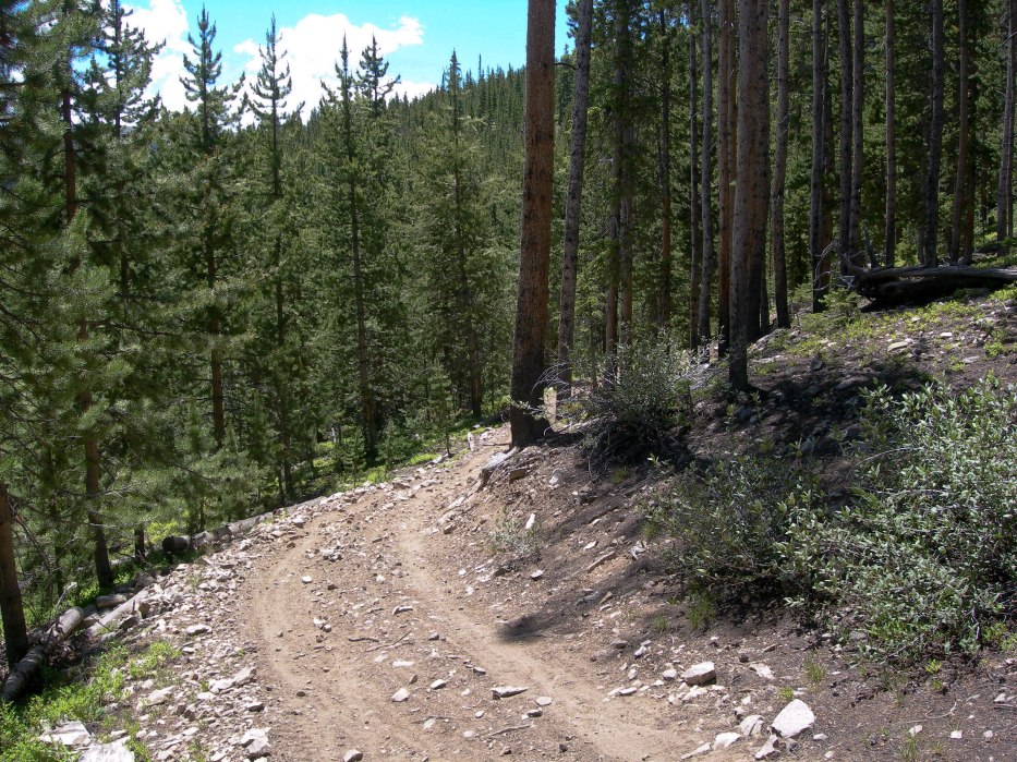 Dreams of Summer: Bike Trail Through the Woods
