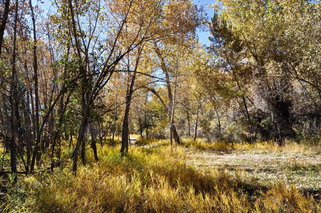 Bike Trail Through the Woods