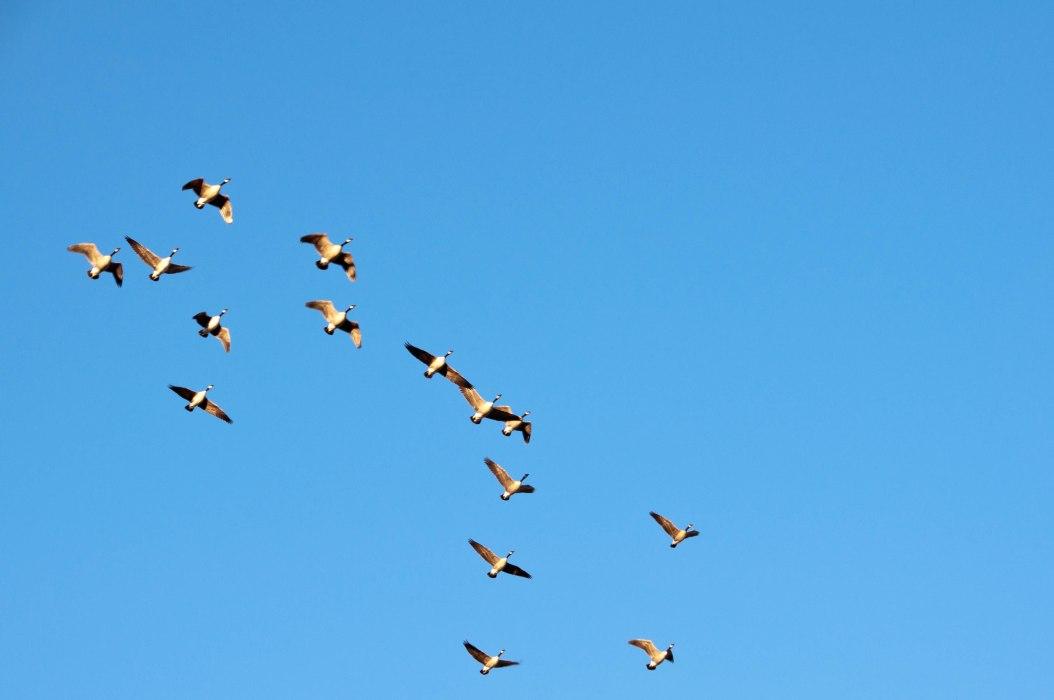 Annual Migration