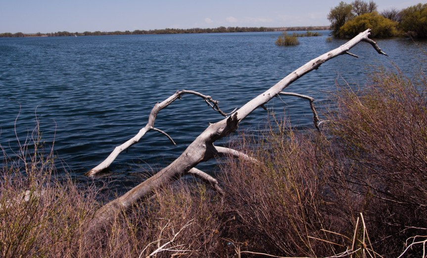 Dead Branches at Water's Edge