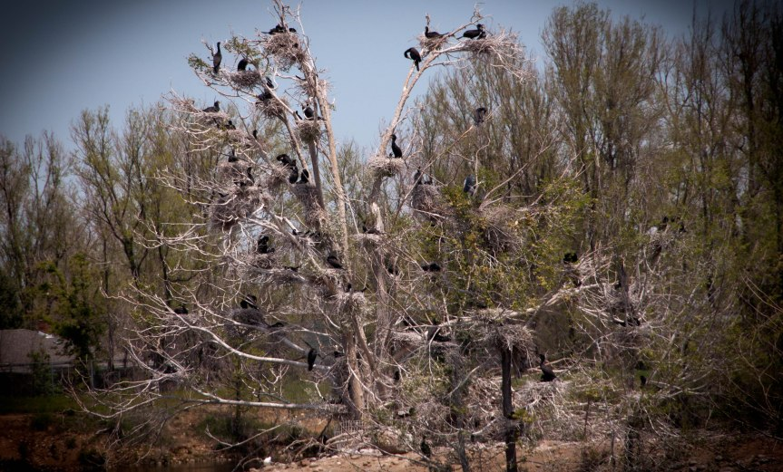 A Strange Nesting Tree