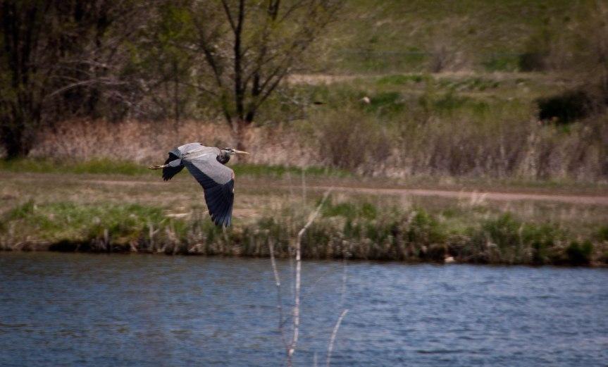 Crane Over Water