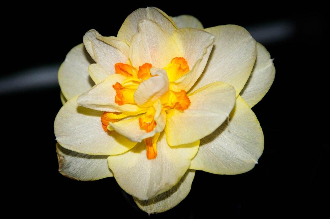 Cut Flower