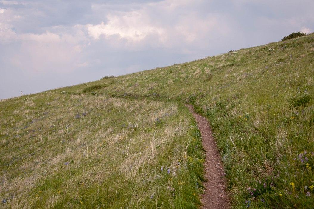 Uphill Through Native Grasses