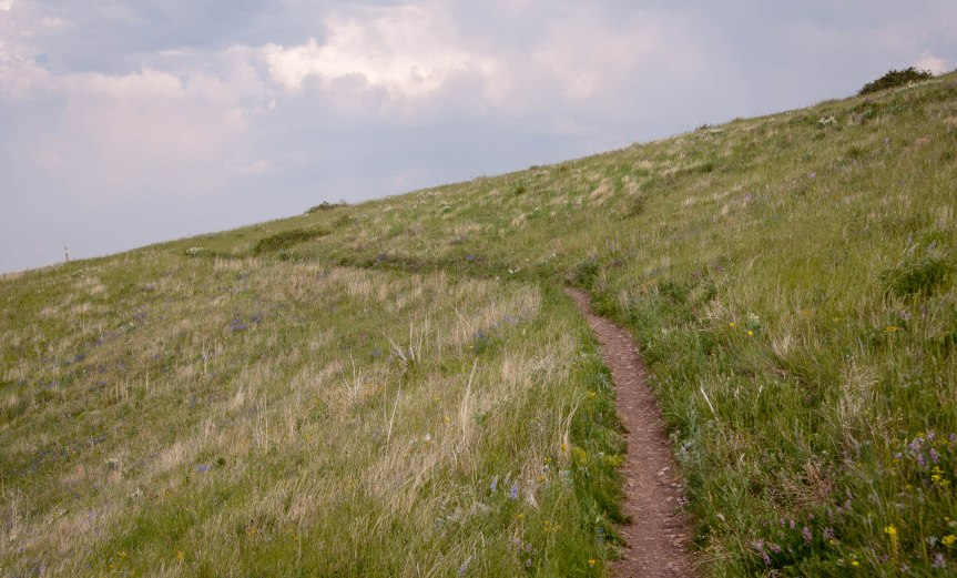 Uphill Through Native Grasses