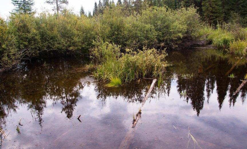 A Mountain Pond