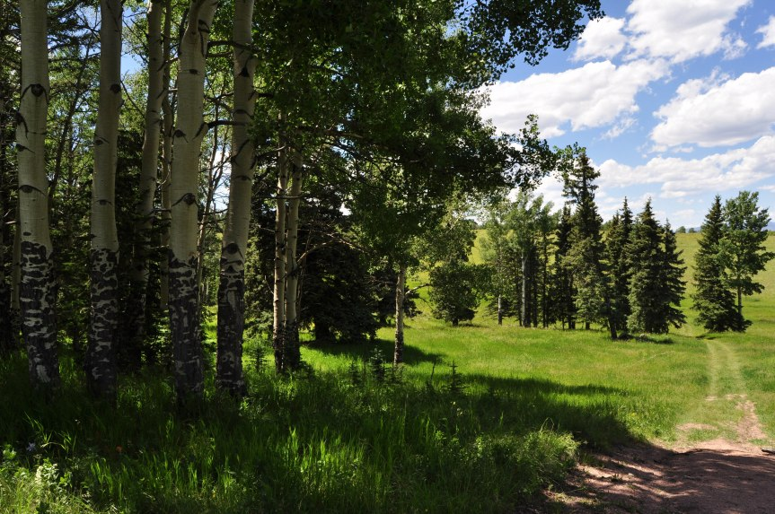 Aspen and Pine Grove