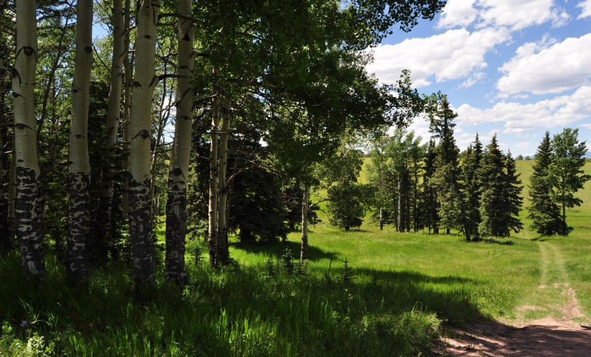 Aspen and Pine Grove