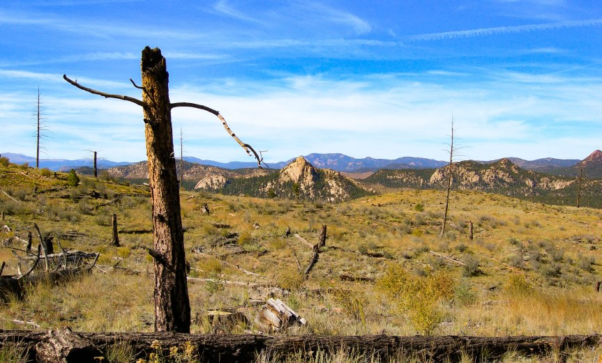 Burned Stump - Mountain Backdrop