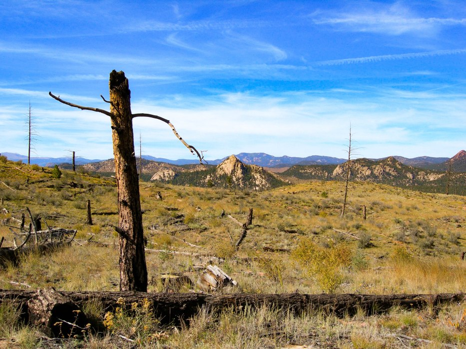 Burned Stump - Mountain Backdrop