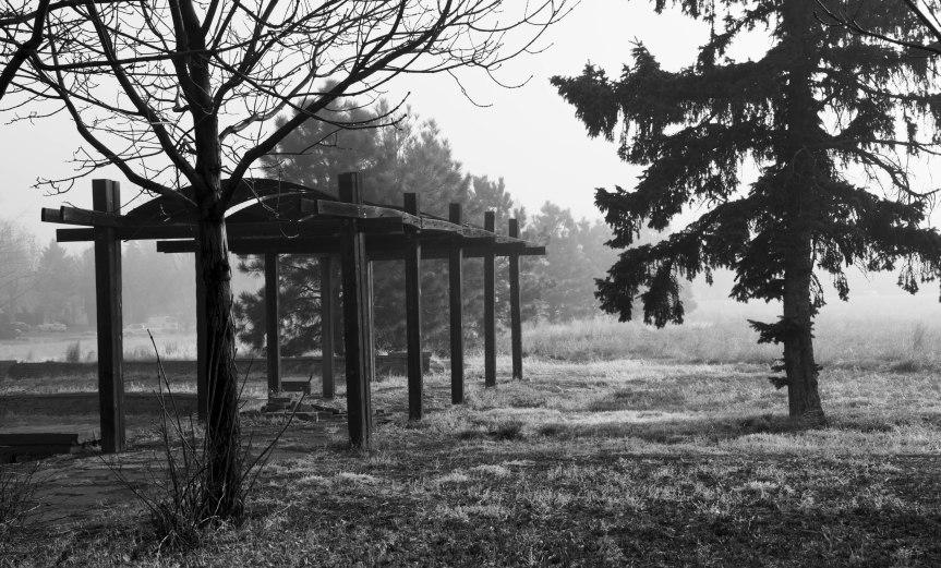 Fog in the Park - B&W